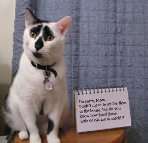 CAT SHAME w.Words