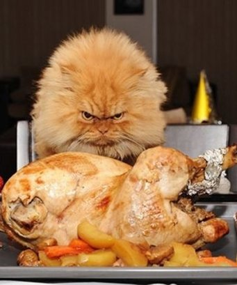 CAT THANKSGIVING